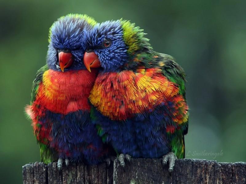 La beauté prouve-t-elle l'existence de Dieu?  www.leboncombat.fr