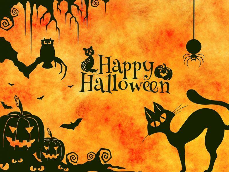 Pourquoi tant d'acharnement à l'encontre de Halloween? Et si c'était injustifié ?  www.leboncombat.fr